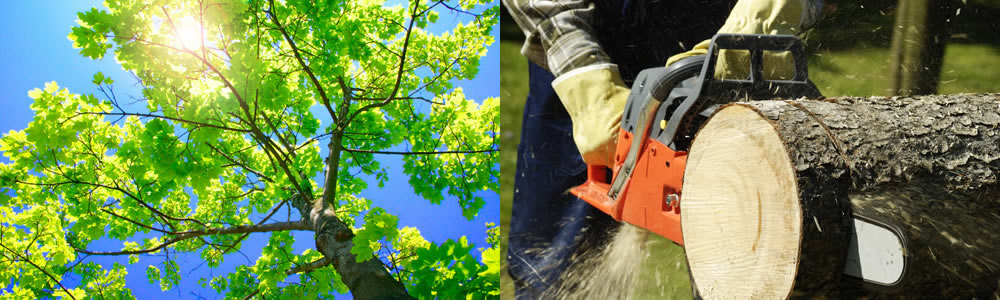Tree Services Sterling Heights